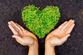 foto of save earth  - hands holding green heart shaped tree  - JPG