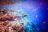 pic of coral reefs  - Reef with a variety of hard and soft corals and tropical fish - JPG
