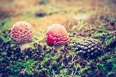 foto of toadstools  - Beautiful red autumnal toadstool  - JPG