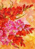 picture of gladiolus  - Picture Oil Painting on a Canvas - JPG