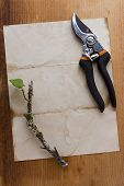 foto of prunes  - Pruning of trees and other plants with special gardening shears - JPG
