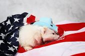 stock photo of ferrets  - Little cute ferret in a cowboy hat on the USA flag background - JPG