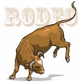 foto of texans  - Rodeo Bucking Bull - JPG