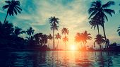 Beautiful tropical beach with palm trees silhouettes at dusk. poster