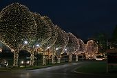 image of christmas lights  - christmas lights decorate trees at local mall - JPG