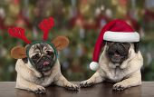 Funny Cute Christmas Pug Puppy Dogs Leaning On Wooden Table, Wearing Santa Claus Hat And Reindeer An poster