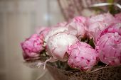 Fresh Bright Blooming Peonies Flowers With Dew Drops On Petals. White And Pink Bud.peony Roses.summe poster