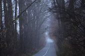 Empty Road In The Morning Passing Through A Forest Covered In Mist Or Fog  (concept Loneliness). poster