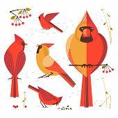 Birdwatching, Bird Feeding Icon Set. Red Northern Cardinal, Comic Flat Cartoon. Winter Birds Of Back poster