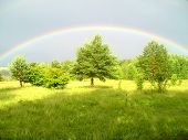 Coloured Rainbow Above The Trees