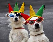 stock photo of puppies mother dog  - Mother and daughter dog team clown around for tourists - JPG