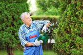 stock photo of tree trim  - Manual worker trimming a tree in a garden - JPG