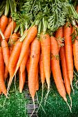 stock photo of farmers  - Vertical photo of a bunch of orange carrots at the local farmer - JPG