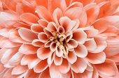 foto of stamen  - Close up of pink flower  - JPG