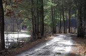 pic of bantams  - A muddy dirt road through White Memorial in Litchfield Connecticut on a sunny winter day along side the Bantam River - JPG