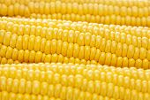 pic of corn-silk  - a background of a ripe yellow corn - JPG