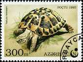 AZERBAIJAN - CIRCA 1995: A stamp printed in Azerbaijan shows an Indian Star Tortoise, Geochelone ele
