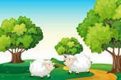 image of hilltop  - Illustration of the two white sheeps at the hilltop - JPG