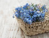 image of forget me not  - Bouquet of spring forget me not flowers in basket - JPG