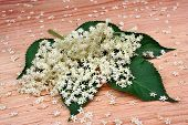 foto of elderberry  - Health elderberry flowers on a wooden table - JPG