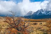 picture of pain-tree  - Autumn in Patagonia - JPG