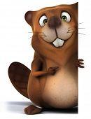 image of beaver  - Beaver - JPG