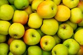 stock photo of apple orchard  - Lots of apples  - JPG