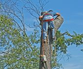 foto of tree trim  - man hugging tree after cutting off top of tree - JPG