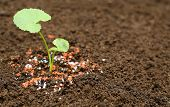 stock photo of humus  - Medicinal thankuni plant on ground with chemical fertilizer - JPG