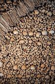 pic of skull bones  - Background made of human bones and skulls - JPG