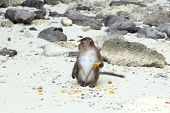 pic of phi phi  - Monkey beach - JPG