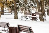 picture of bench  - Winter landscape with benches spruce branches and trunks in the snow - JPG