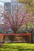 picture of portland oregon  - Spring bloom in a park Portland Oregon - JPG