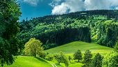 picture of wonderful  - wonderful green mountain meadow with forest on background - JPG