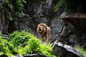 foto of zoo  - Zoo Chiangmai Thailand - JPG