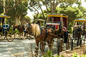 pic of carriage horse  - Row of horse with carriages in Mdina - JPG