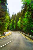 Highway Road Journey In Green Forest Sunlight Landscape. Forest Road Way Scenic Vertical Photo Sunli poster
