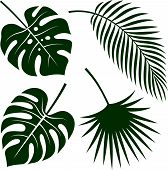 Vector Silhouettes Of Tropical Leaves. Monstera, Coconut Palm And Fan Palm poster