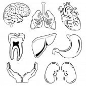 pic of bronchus  - Vector medical icons - JPG