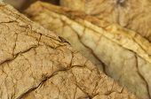 stock photo of tobaco leaf  - Dried tobacco leaves fine details closeup  - JPG