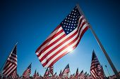 stock photo of veterans  - A display of many American flags with a sky blue background - JPG