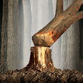image of deforestation  - Deforestation concept and when a tree falls symbol with an old tree in a forest being cut down for development or fire wood as a symbol of the environmental damage and problems in the conservation of the rainforest as in the Amazon - JPG