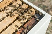 stock photo of beehives  - Open beehive with bees and frameworks - JPG