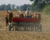 stock photo of horse plowing  - amish farmer planting spring wheat - JPG