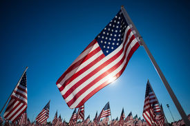 pic of veterans  - A display of many American flags with a sky blue background - JPG