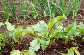 stock photo of laxatives  - Community garden in full growth in urban community - JPG