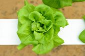 image of gents  - Topview of hydroponic vegetables in greenhouse at Genting Highland Malaysia - JPG