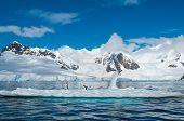 picture of iceberg  - Gentoo penguins standing on an iceberg Antarctica