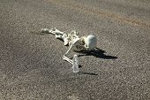 foto of sternum  - A lost hiker dies of thirst on a deserted desert road inches away from a bottle of water - JPG