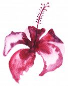 picture of mulberry  - Watercolor painting of mulberry flower - JPG